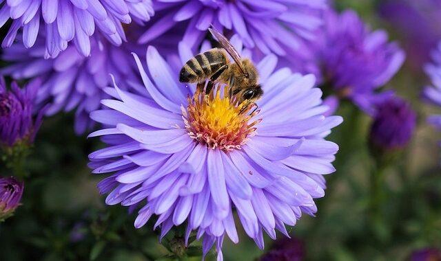 čebelji strup